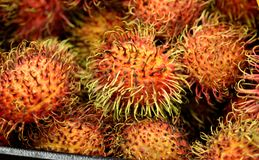 Rambutan, Nephelium lappaceum. Evergreen tree with pinnate compound leaves and oval  fruit covered with long hooked spines, including single seed and lychee Stock Photos