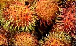 Rambutan, Nephelium lappaceum. Evergreen tree with pinnate compound leaves and oval  fruit covered with long hooked spines, including single seed and lychee Stock Image