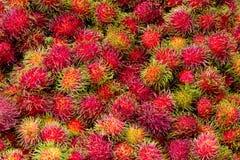Rambutan - Rambutan för tropiska frukter Arkivbilder