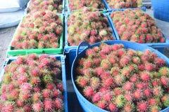 Rambutan. Red rambutan fruit in basket Royalty Free Stock Images
