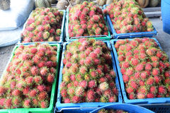 Rambutan. Red rambutan fruit in basket Stock Images