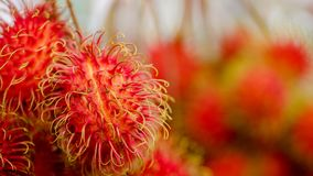 Rambutan sweet delicious fruit. Close-up of rambutan sweet delicious fruit in fruits market Royalty Free Stock Image