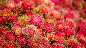 Rambutan sweet delicious fruit. Close-up of the rambutan sweet delicious fruit in fruits market, Select focus Royalty Free Stock Photos