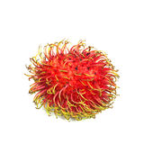 Rambutan sweet delicious fruit isolated on white background. Great for any use Royalty Free Stock Photos