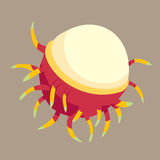 Rambutan vector illustration. Sweet delicious fruit. Royalty Free Stock Images