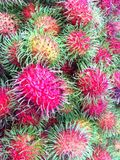 Rambutans Fotos de Stock Royalty Free