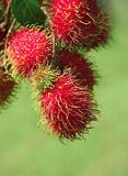 Rambutans fruit Stock Photo