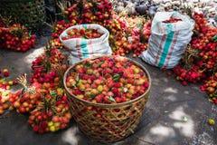 Rambutans i Bali Arkivbilder
