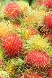 Rambutans Tropical Fruit Stock Image