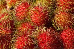 Rambutants royalty free stock image