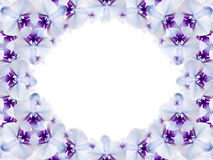 Rame of flowers. white-blue-purple flowers are gathered in a circle on a white background. for design. Card for the holiday. Stock Photography