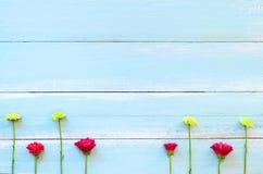 Rame gjorde av röda och gröna krysantemumblommor på blå träbakgrund royaltyfria foton