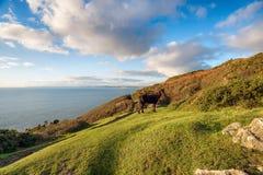 Rame Head in Cornwall Stock Photography