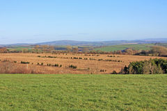 Rame Peninsular, Cornwall. Field in the Rame peninsular, Cornwall Royalty Free Stock Photography