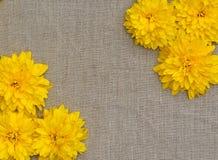 Ramen av guling blommar mot en bakgrund av den grova torkduken Royaltyfria Bilder