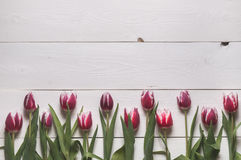 Ramen från knopparna av tulpan Royaltyfri Foto