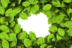 ramen inramniner leavesnaturserie Royaltyfria Foton