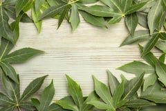 ramen inramniner leavesnaturserie Arkivfoton