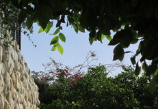 ramen inramniner leavesnaturserie Royaltyfri Foto