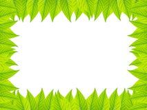 ramen inramniner leavesnaturserie Arkivbild