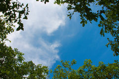 ramen inramniner leavesnaturserie Arkivfoto
