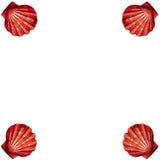 ramen shells vektorn Arkivfoton