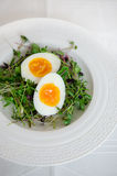 Ramen style eggs and fresh sprouts Stock Images