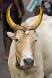 Rameswaram India, Maj, - 25, 2014 Obraz Royalty Free