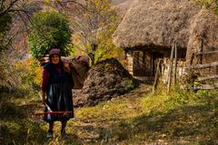 Old woman carrying hay for animals Stock Images