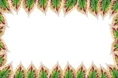 ramgreenleaves Arkivbild