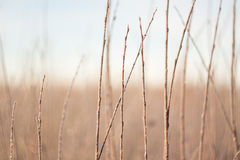 Rami alla luce di alba, fondo stupefacente di inverno Fotografia Stock