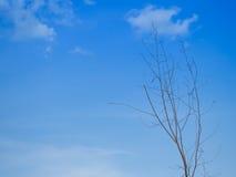Rami asciutti dell'albero contro chiaro cielo blu Fotografia Stock
