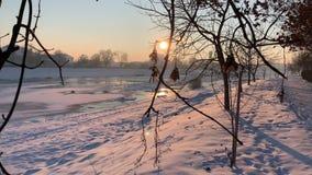 Rami asciutti nell'orario invernale Neve dappertutto Tempo di tramonto stock footage