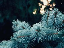 Rami attillati nella foresta Fotografie Stock