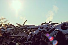 Rami attillati nella neve immagini stock
