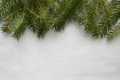 Rami attillati su fondo bianco, struttura di neve Fotografia Stock