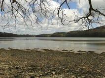 Rami che sporgono la diga di Lopwell del fiume soggetto alle maree Fotografia Stock Libera da Diritti