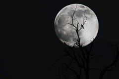 Rami con la luna Immagine Stock