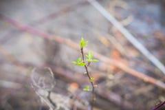 Rami con la nuova ustione delle foglie verdi in fuoco immagini stock libere da diritti