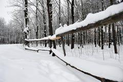 Rami con le foglie gialle al di sotto dell'inverno della neve Fotografie Stock