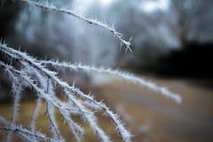 Rami congelati con le punte del ghiaccio Fotografia Stock Libera da Diritti