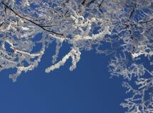 Rami congelati contro cielo blu Immagine Stock