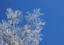 Rami congelati contro cielo blu Fotografia Stock Libera da Diritti