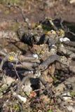 Rami curvi dell'albero ornamentale Immagine Stock Libera da Diritti