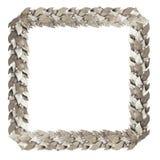 Rami d'argento quadrati della struttura di alloro Immagine Stock