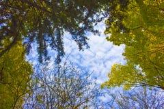 Rami degli alberi nel cielo Fotografia Stock