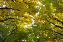 Rami degli alberi nel cielo Immagine Stock