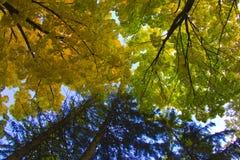 Rami degli alberi nel cielo fotografia stock libera da diritti