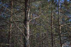 Rami degli alberi in una foresta fotografia stock