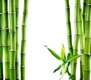 Rami del bordo di bambù Immagini Stock
